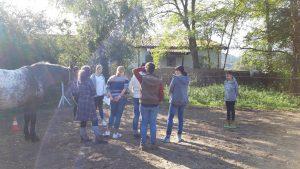Gruppentermin bei Jutta Einhaus Pferdegestützter Coach