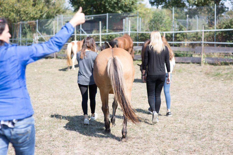 Positives Feedback Pferdegestütztes Coaching