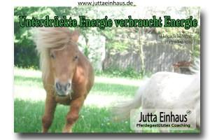 Motivation Pferdegestütztes Coaching Freiburg im Breisgau