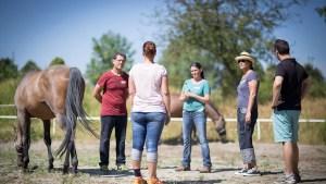 Wochenendseminar Pferdegestütztes Coaching in Deutschland