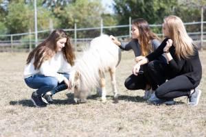 Junge Erwachsene im Coaching mit Pferden in Freiburg im Breisgau