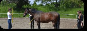 Gruppe in einer Übung beim Coaching mit Pferden
