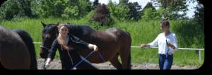 Junge Erwachsene beim Coaching mit Pferden