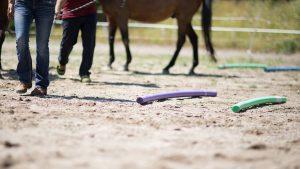 Führungskräfte I Pferdegestütztes Coaching