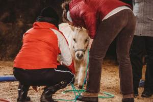 Pferdegestütztes Coaching mit Shetlandyponys