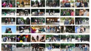 Übersicht Fotos Coaching mit Pferden