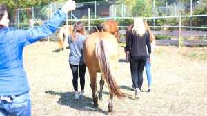 Gruppe Jugendlicher im Coaching mit Pferden