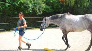 Vollblut Stute Trixi als Coachingpferd