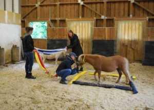 Pferdegestützt lernen