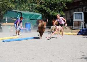 Methoden im Pferdegestütztem Coaching