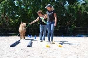 Coaching mit Pferd und Pony