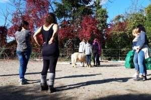 Pferdegestützte Seminare in Deutschland