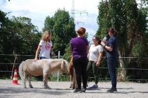 Arbeit mit Pferden Deutschland