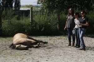 Coaching mit Pferden in Freiburg