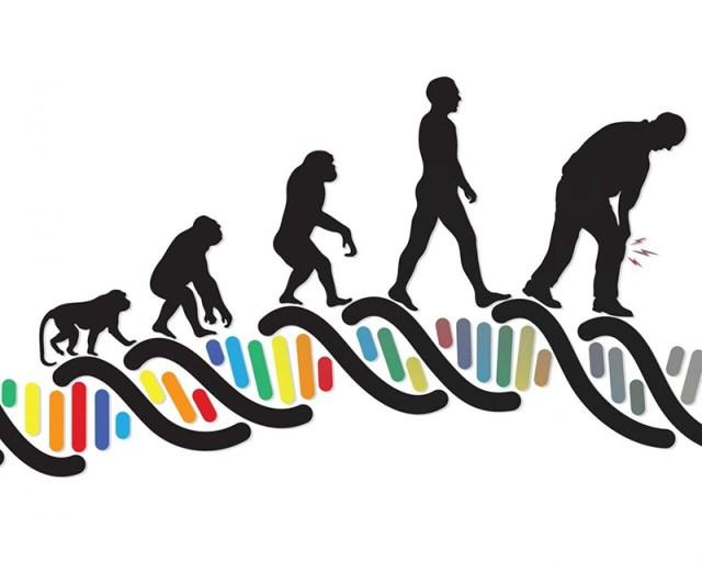 Konsep Konsep Dan Mekanisme Evolusi Berita Bisnis Dan Wisata Terkini - Perkawinan Tak Acak Evolusi, 7 Faktor Yang Mempengaruhi Evolusi Makhluk Hidup Biologi Edukasi Belajar Sains Biologi