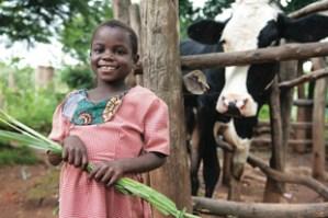 Frony Chaima of Malawi, with a heifer her family got from Heifer International photo/courtesy of heifer international