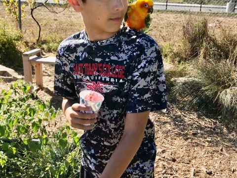 Oscar Gurrola, a student at Richmond College Prep, waters the school garden with his pet bird. (Laura Paull)