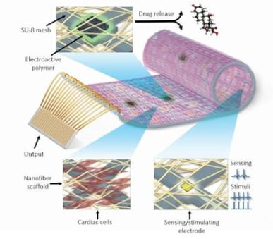 """he remotely-regulated """"cyborg heart patch"""" comprised of living cardiac cells, polymers, and a complex nanoelectronic system. Credit: Tel Aviv University via Eurekalert."""