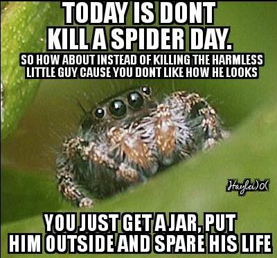 don't kill a spider