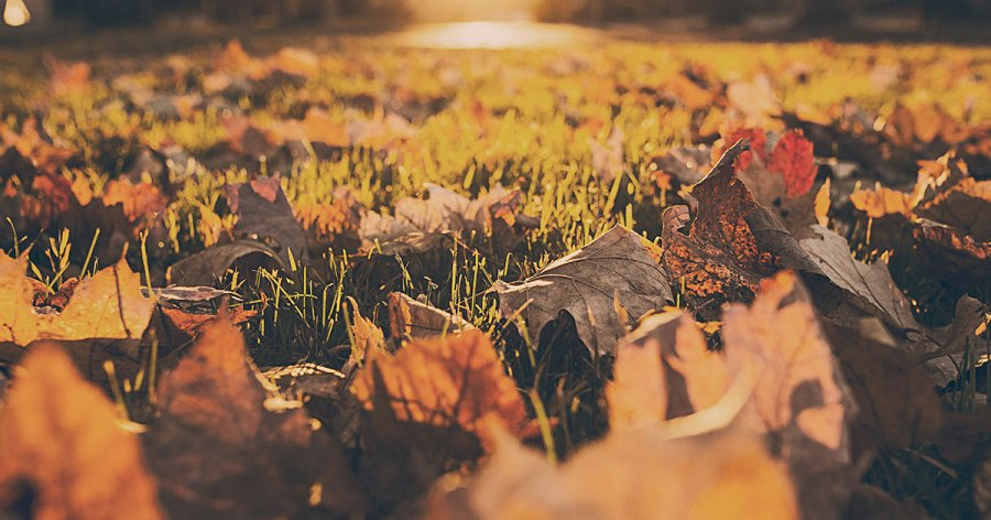 Fall foliage and leaves on the ground