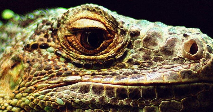 A dragon-ish looking lizard.
