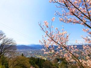 下諏訪町 桜 2018