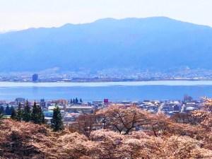 下諏訪町 水月公園 桜