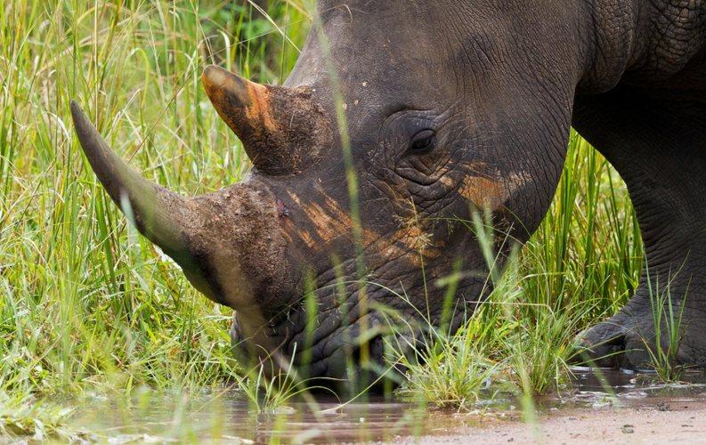 Uganda's Ziwa Rhino Sanctuary