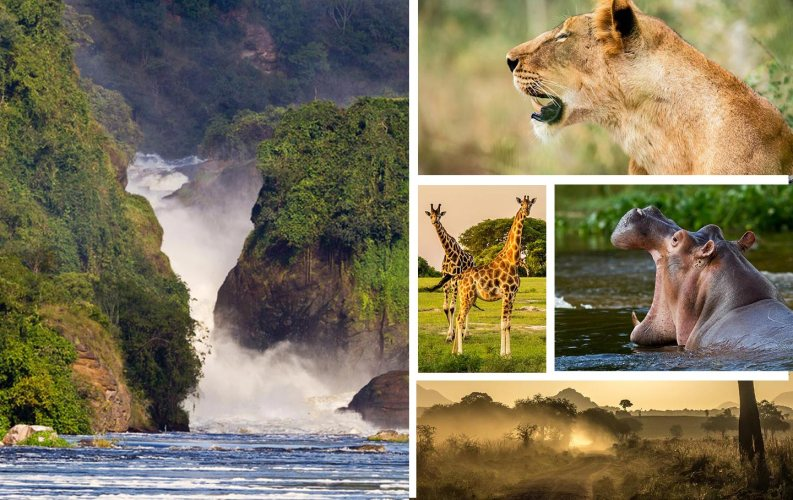 luxury Murchison Falls Safari Uganda