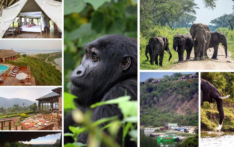 Exclusive Wildlife and Gorilla Tracking Safari