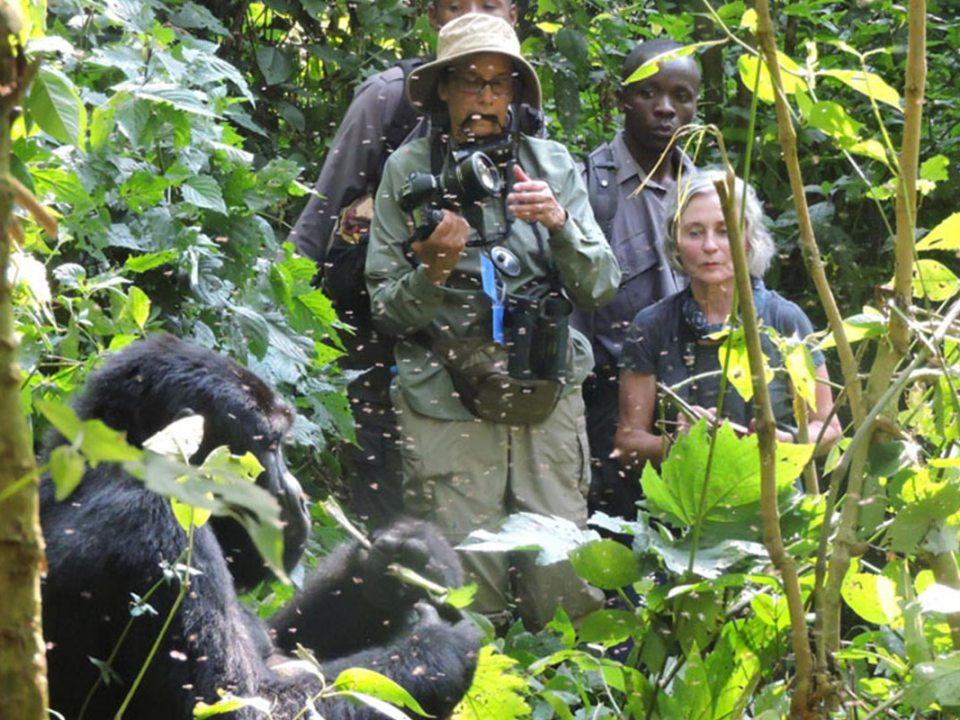 Mountain Gorilla Permits and gorilla trekking tours in Uganda and rwanda in Uganda and Rwanda