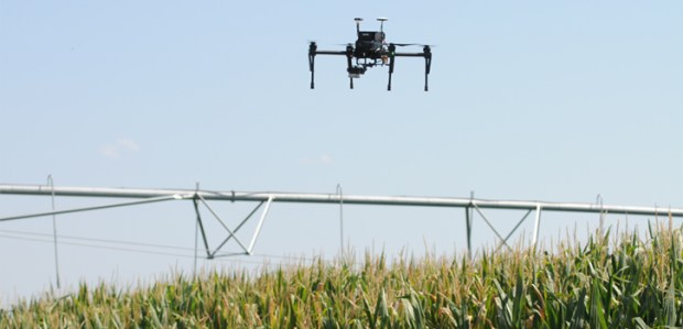 A drone flies over a corn field for research study.
