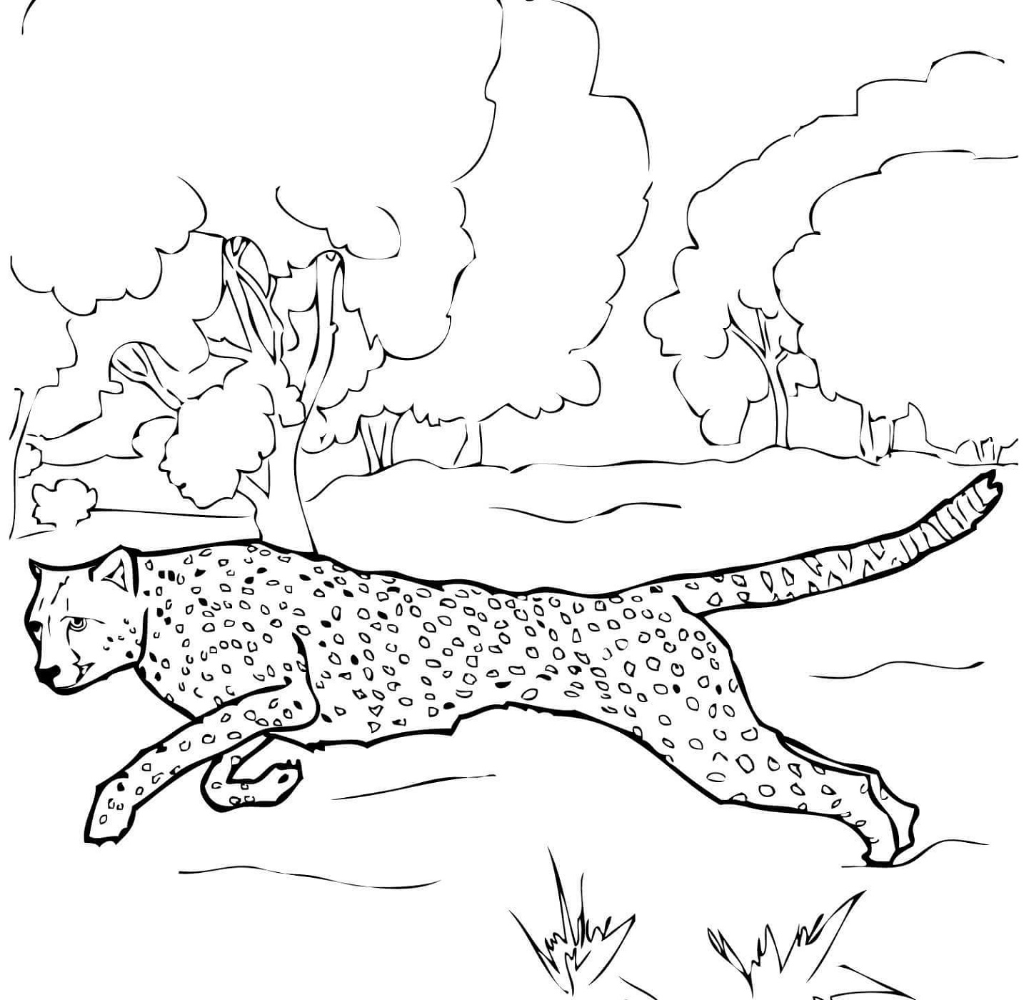 Cheetah Coloring Pages Running