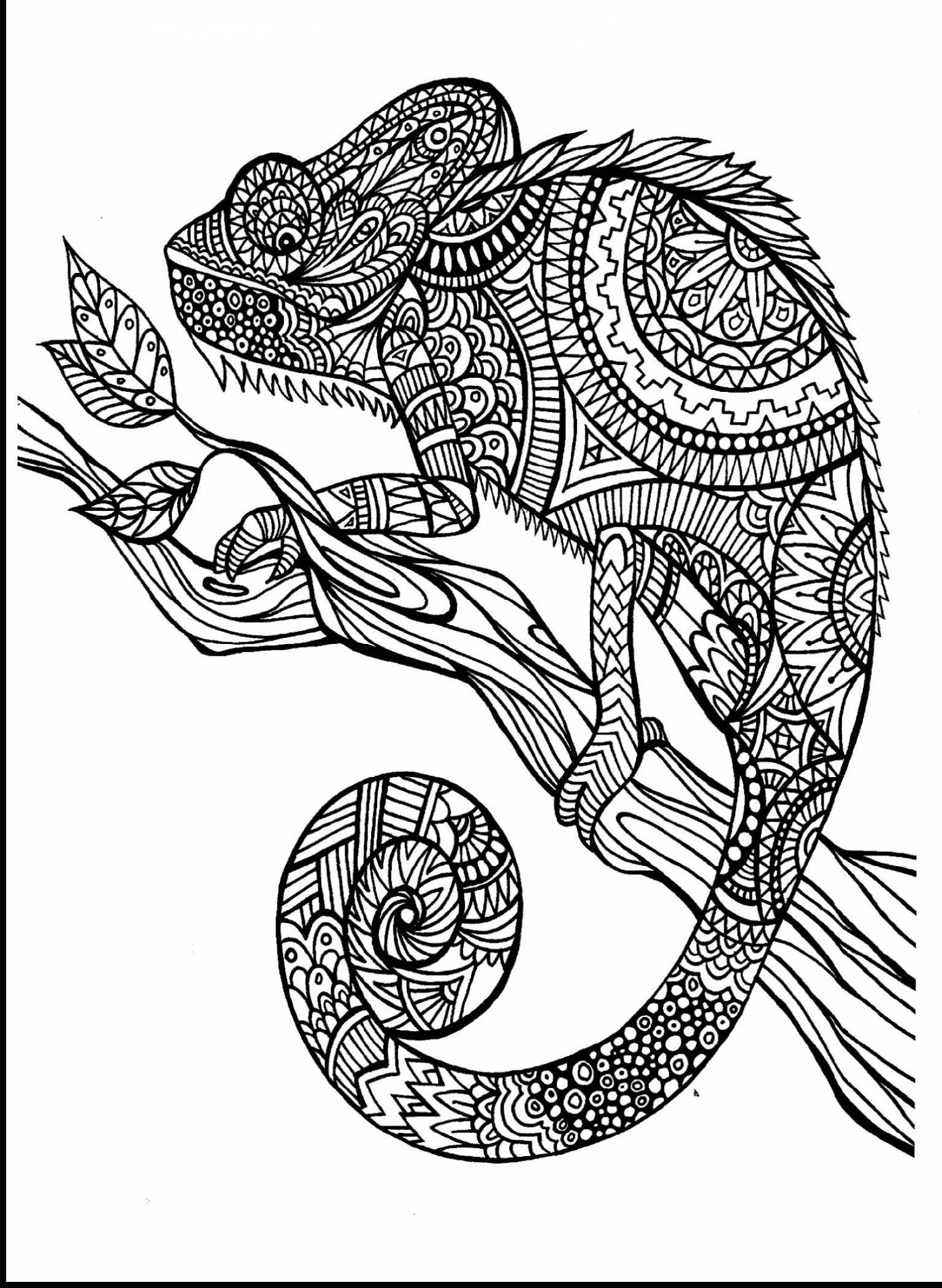 Animal Coloring Books For Adults