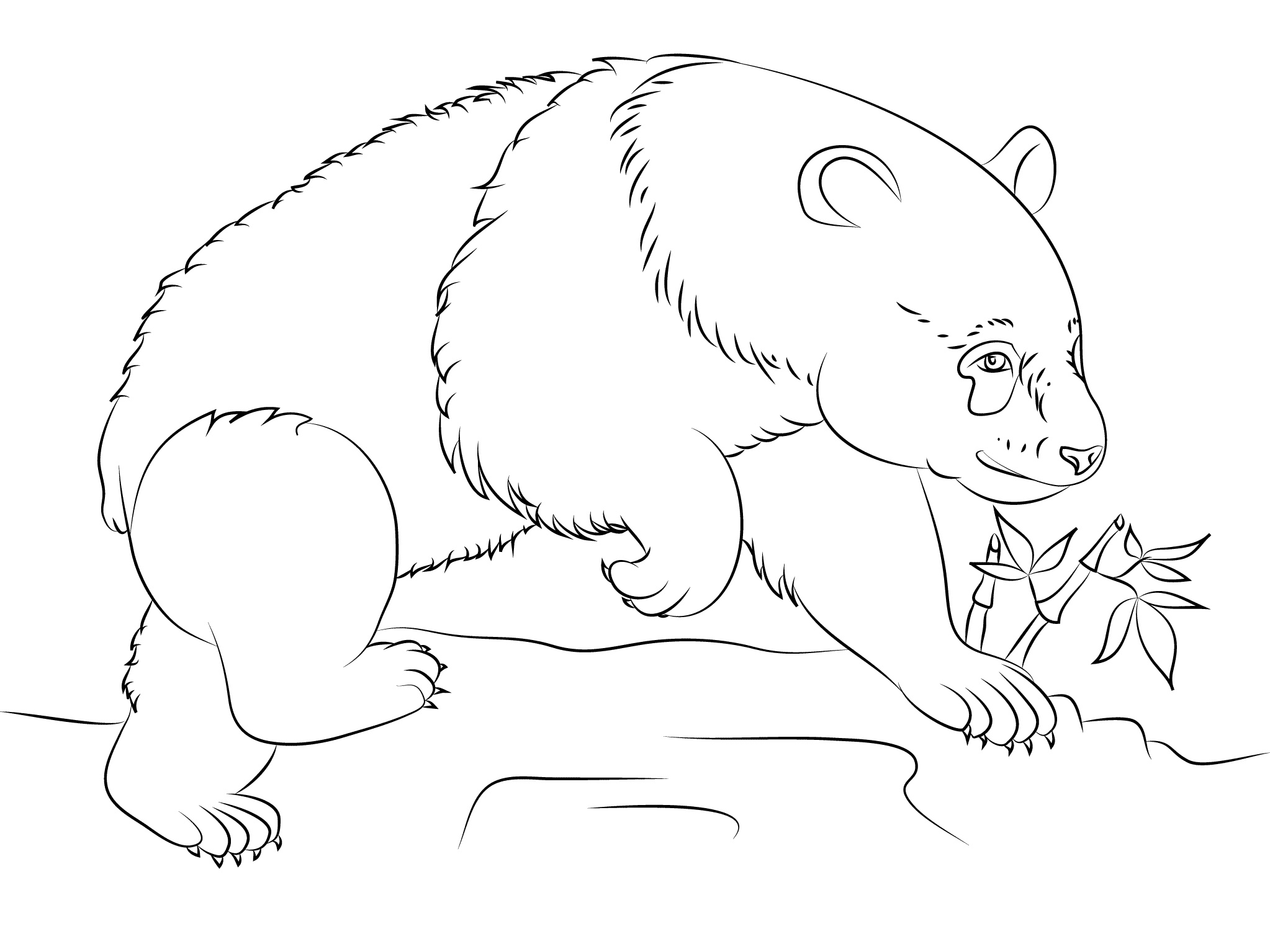 Panda Bear Coloring Pages For Coloring Or Drawing Class