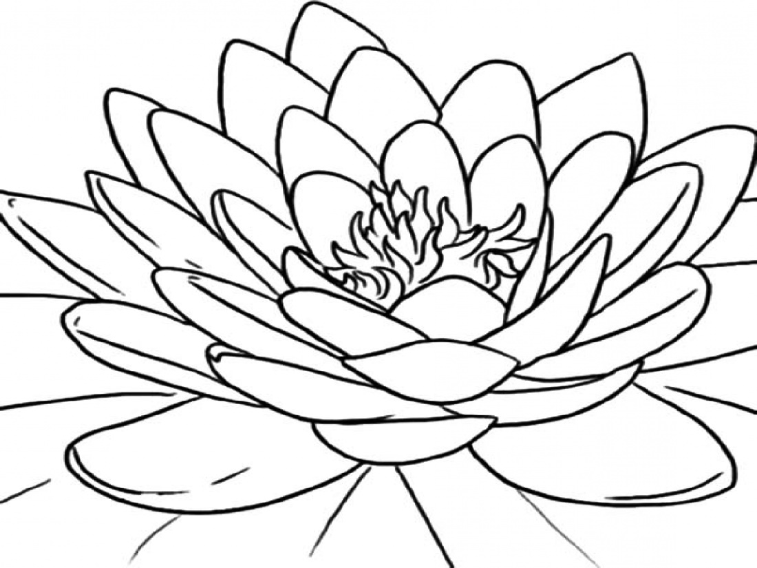 Lotus Flower Coloring Page For Adults