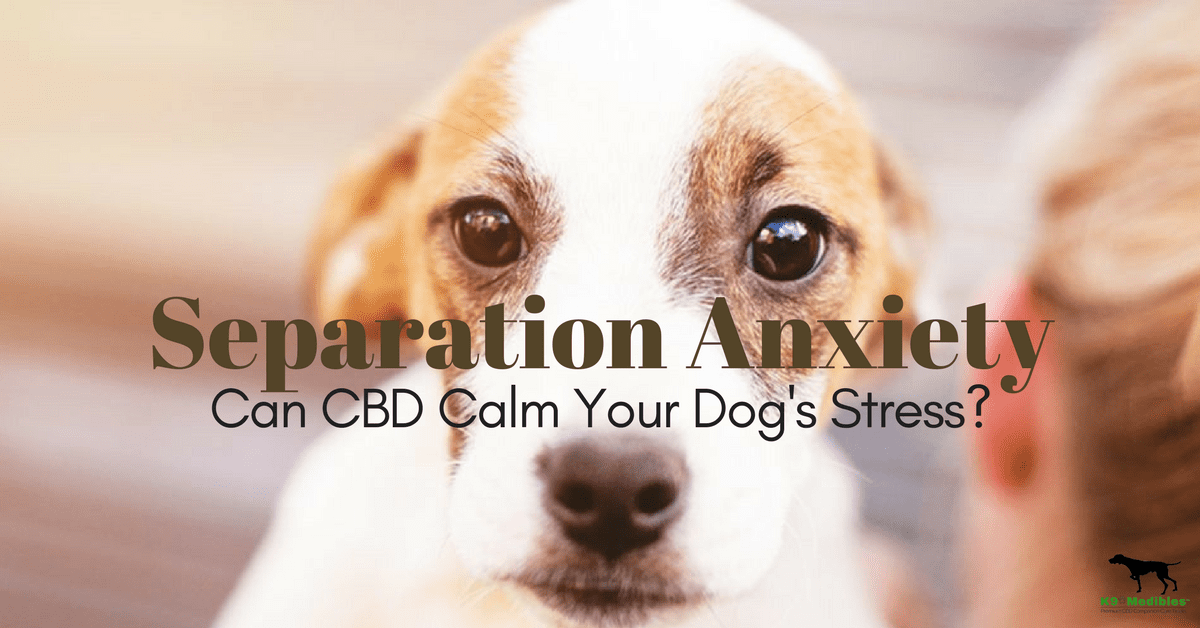 CBD for Dog separation anxiety