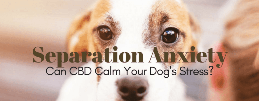 CBD For Dogs Anxiety