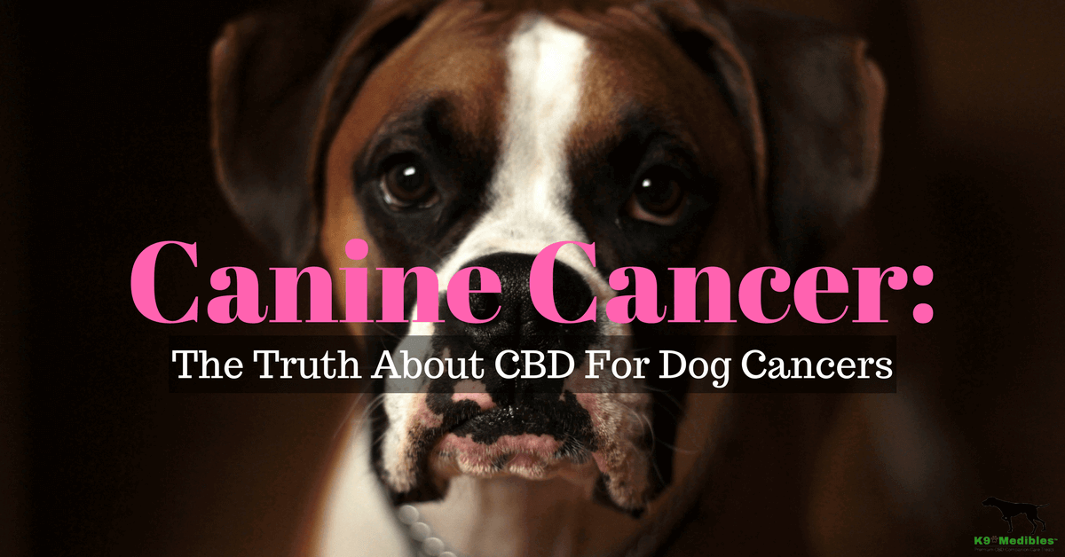CBD for dogs with cancer. CBD for dogs lymphoma. THC and dogs. CBD oil and dogs. Canine companion tincture.