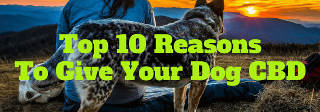 Top 10 Reasons to Give Your Dog CBD