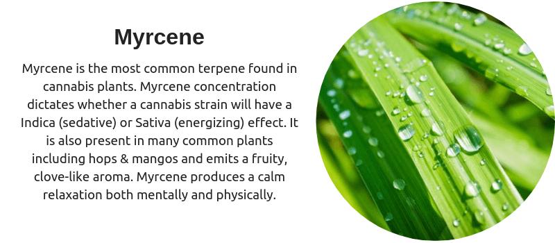 Cannabis terpene myrcene