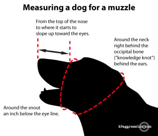 Measuring a dog to wear a muzzle