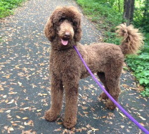 Dog Walking DC Arlington VA Bethesda Frederick MD