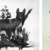 Our Canine Cousins: The Dingo