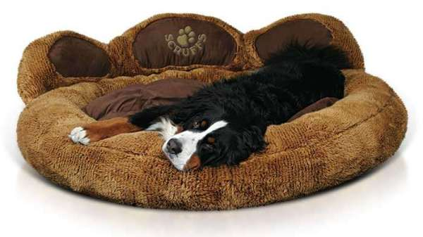 The Top Five Designer Dog Beds