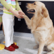 Can Dogs be Autistic?