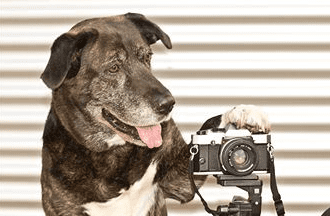 How to take photos of dogs