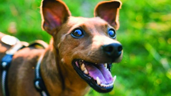 Britain's Dog Owners Spend Millions Entertaining Pets