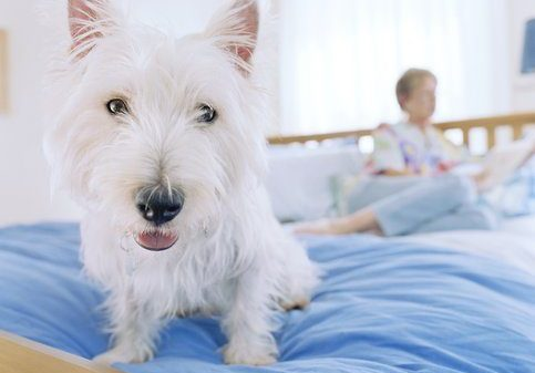 Total Pet Health Month: Veterinary Expert Q&A