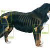 Canine Arthritis: Don't Let It Put A Stop To Your Life - The Myths Debunked